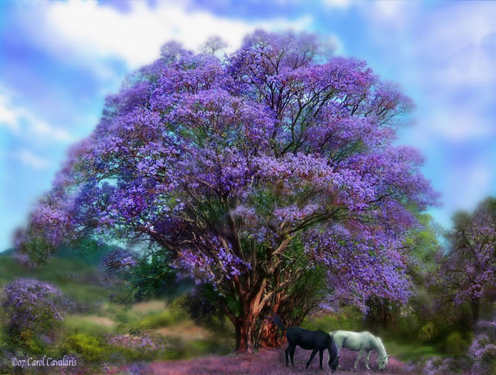 Under The Jacaranda
