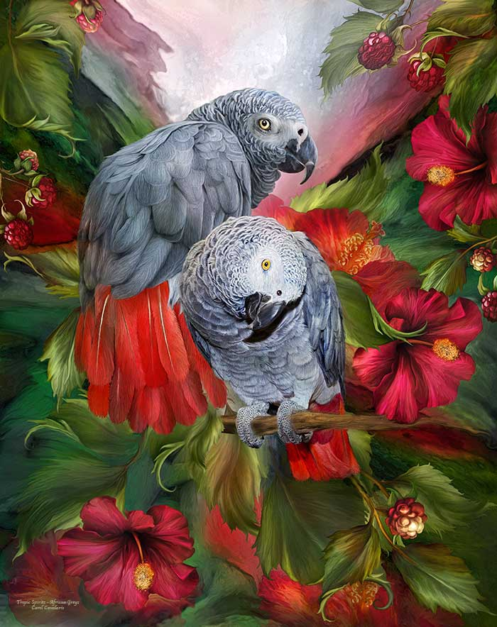 Tropic Spirits African Greys