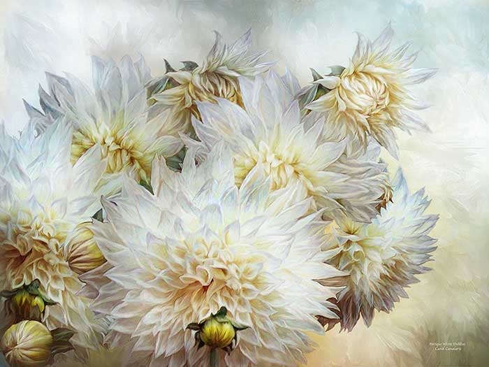 Antique White Dahlias