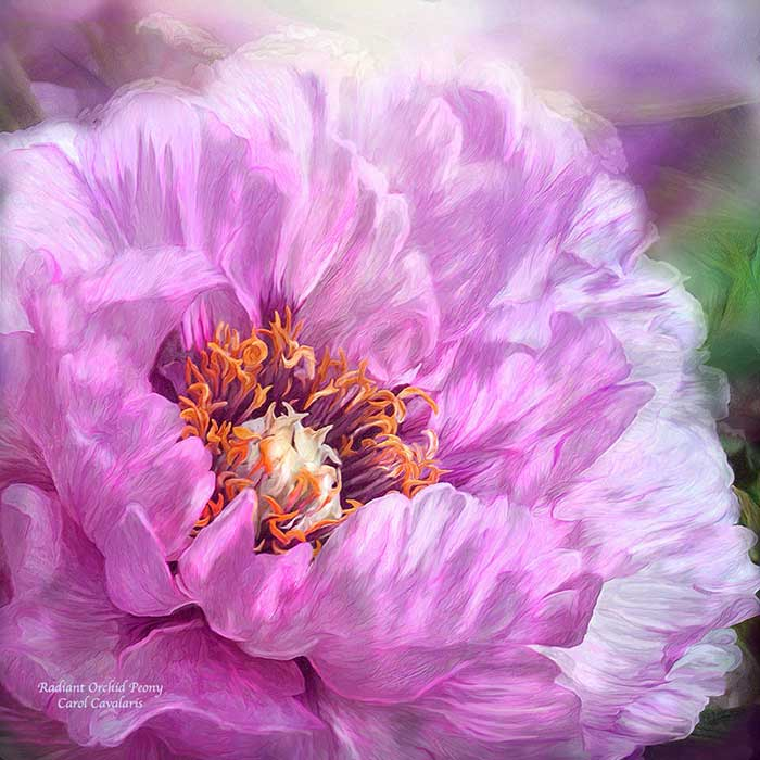 Radiant Orchid Peony