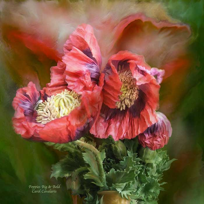 Poppies Big And Bold