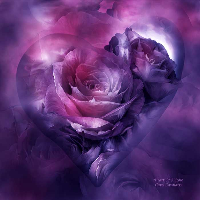 Heart Of A Rose Burgundy Purple