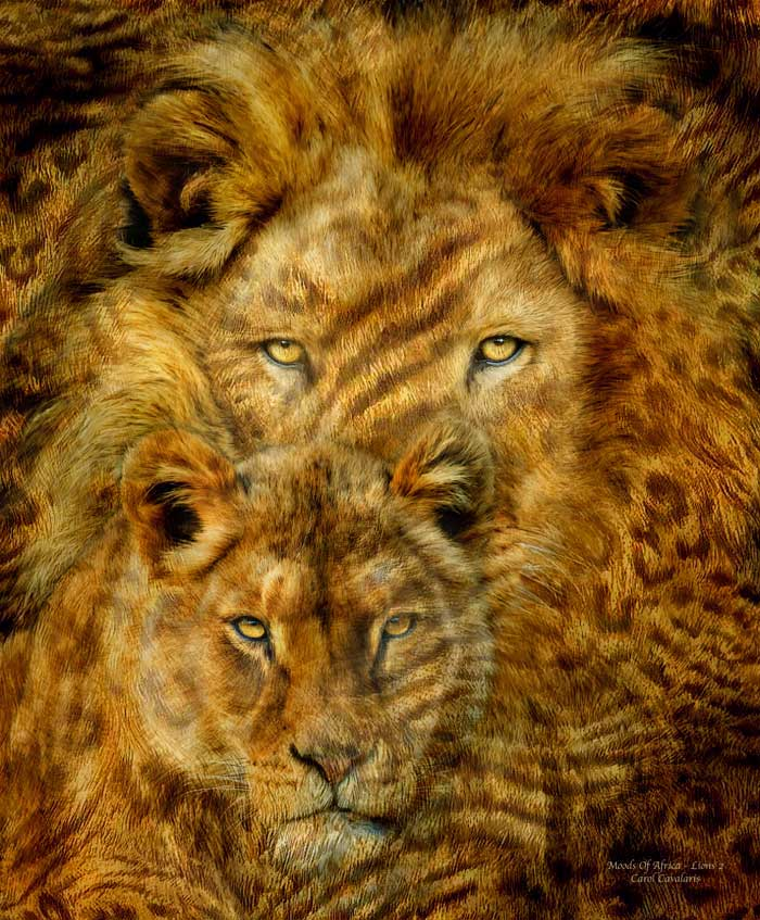 Moods Of Africa Lions Two M