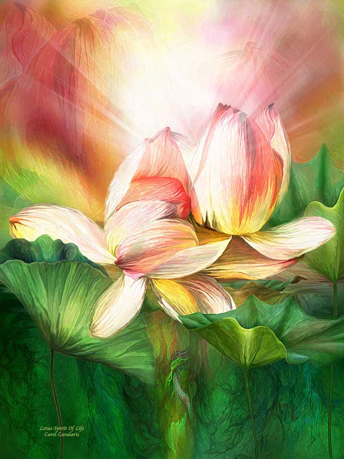 Lotus Spirit Of Life