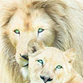 White Lion Family Mates